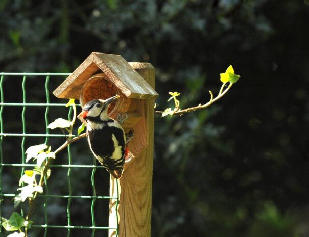 vogels in de tuin!